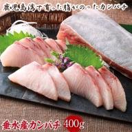 A1-22272/カンパチ 切り身 (真空パック) 垂水市産 ぷりぷり食感!