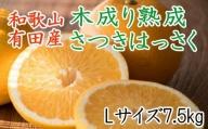 こだわりの和歌山有田産木成り熟成さつき八朔7.5Kg(Lサイズ)※2022年4月上旬より順次発送