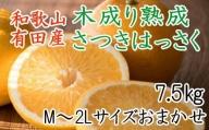 こだわりの和歌山有田産木成り熟成さつき八朔7.5Kg(M~2Lサイズおまかせ)※2022年4月上旬より順次発送