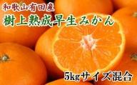 紀州有田産早生みかんの樹上熟成みかん5kg(サイズ混合) ※2021年1月中旬より順次発送