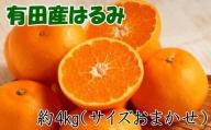 【厳選・濃厚】紀州有田産のはるみ約4kg(サイズおまかせ) ※2022年1月下旬より順次発送