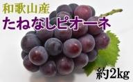 【新鮮・産直】和歌山かつらぎ町産たねなしピオーネ約2kg※8月下旬から順次発送