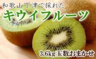 和歌山の下津で採れたキウイフルーツ約3.6kg(玉数おまかせ・秀品)※2022年1月中旬~2月下旬までに発送