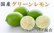 【産直】和歌山産グリーンレモン約3kg(サイズ混合)※2021年10月中旬より順次発送