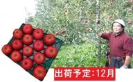 12月 大江の恵み 大玉サンふじ約5kg・秀以上【山形りんご・大江町産】