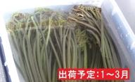 1~3月 戻しわらび1kg 【山形山菜】