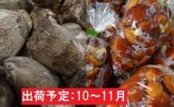 10~11月 土里芋1.5kg原木なめこ1kg 【山形県産さといも・きのこ】