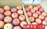 年内 訳あり 家庭用サンふじ約10kg 【山形りんご】