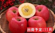 11月 高徳りんご約2.5kg 【山形りんご・大江町産】