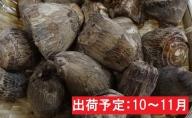 10~11月 土里芋4kg 【山形県産さといも】