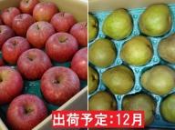 12月 訳あり 家庭用サンふじ&ラ・フランス約10kg【山形りんご・洋梨】