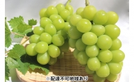 ガーデンファームヨシダ 岡山県産 シャインマスカット 1.2kg以上(2房)