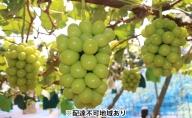 ガーデンファームヨシダ 岡山県産 シャインマスカット 2kg以上(3~4房)