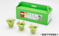 岡山県産 たたらみねらる シャインマスカット おひとり様ぶどう 3カップ入り