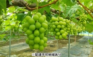 岡山県産 冷温保存 たたらみねらる シャインマスカット 2房(1房約600g)