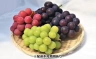 西江果樹園 岡山県産 シャインマスカットと食べごろぶどう詰合せセット 2kg以上(3~5房)