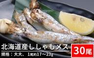 北海道産ししゃもメス(30尾 規格:大大)※1尾約17~23g