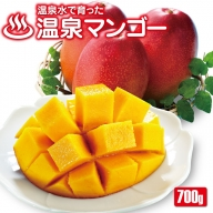 W-2260/マンゴー 秀品 温泉マンゴー700g (2021年夏発送)