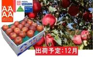 12月 特別栽培 訳あり 家庭用サンふじ約10kg  【山形りんご・大江町産・鈴木果樹園】