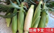 10月 朝採りホワイトショコラ約5kg・A品L・12~16本程度 【山形とうもろこし・大江町産・明石農園】