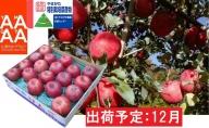 12月 特別栽培 贈答規格サンふじ約5kg 【糖度14度以上・山形セレクション認定品・山形りんご・鈴木果樹園】