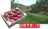 1月 最高級 特選大玉サンふじ約3kg 【大江町産・山形りんご・大地農産】
