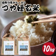 SA0782 令和2年産【玄米】つや姫10kg(10kg×1袋) HO