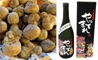 青森県五所川原名産 つくね芋焼酎 やってまれ720ml×1