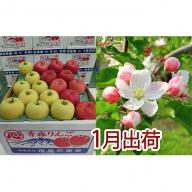 1月 贈答クラス津軽のりんご約5kg2種以上16~20玉(品種おまかせ)