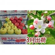 3月 贈答クラス津軽のりんご約5kg2種以上16~20玉(品種おまかせ)