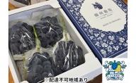 古川ぶどう園 岡山県産 ニューピオーネ 約2kg(3~4房入り)