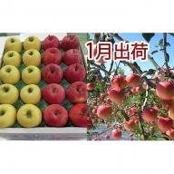 1月 家庭用津軽のりんご約10kg2種以上40~46玉(品種おまかせ)