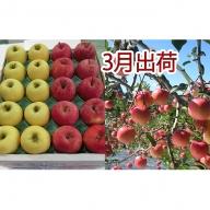 3月 家庭用津軽のりんご約10kg2種以上40~46玉(品種おまかせ)