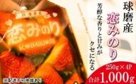 「先行予約」錦町産 イチゴ 恋みのり 約250g×4P 3L サイズ 2021年12月上旬より順次発送 【配送不可:離島】