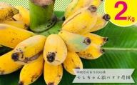 希少栽培種のばなな!ぐしちゃん銀バナナ約2Kg