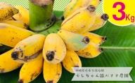 希少栽培種のばなな!ぐしちゃん銀バナナ約3Kg