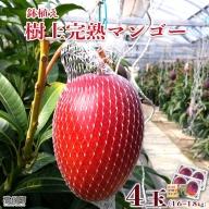 <鉢植え 樹上完熟マンゴー 400~450g×4玉 計1.6kg~1.8kg>