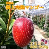 <鉢植え 樹上完熟マンゴー 2玉(800g~900g)>