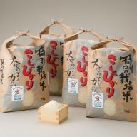 【C-547】よこいファーム 特別栽培米コシヒカリB [高島屋選定品]