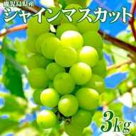B2-0835/鹿児島産ぶどう「シャインマスカット」3kg(4房)