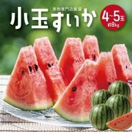 SB0194 酒田の果物専門店厳選 庄内産 小玉すいか 約8kg(4~5玉入)