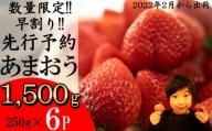 MZ026 福岡県産 あまおう 1500g(250gup×6パック )いちご イチゴ 苺 果物 フルーツ 2022年2月上旬より順次発送