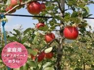 信州小諸・福井りんご園のシナノスイート(家庭用)約5kg