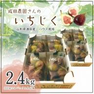 SA0812 ハウス栽培 いちじく 約2.4kg(300g×4パック入り2箱) 9月上旬~10月上旬お届け