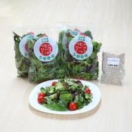【21-225】土耕栽培のベビーリーフと野菜用ハーブ塩セット