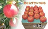 9月 りんご 10kg程度 葉とらず サンつがる 【青森りんご・クール便】