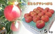 9月 りんご 5kg程度 葉とらず サンつがる 【青森りんご・クール便】
