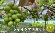 【早期予約】桃山ぶどう園のシャインマスカット約2kg(ハウス栽培)