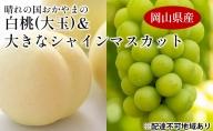 晴れの国おかやまの 白桃(大玉) 1.5kg以上(4~6玉)大きなシャインマスカット1房900g以上