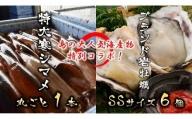 今が旬!朝どれ丸ごと寒シマメ特大サイズ(350-500g)と岩牡蠣SSサイズ6個セット